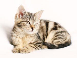 cat-1192026_1280 pixabay