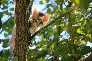 cat-1647775_1280 pixabay