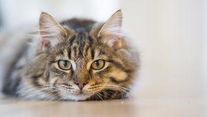 cat pixabay-1686730_1280