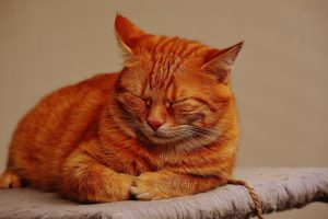 cat-1692794_1280 pixabay
