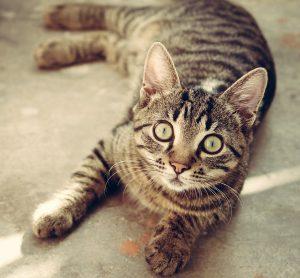 pixabay cat-618470_1920