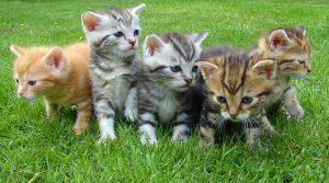 kittens-555822_1280 pixabay