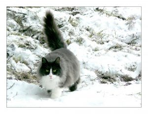 pixabay-neige-queue-cat-251523_1920
