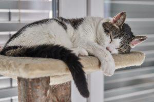 la gabapentine un nouvel anti stress du chat vet4care. Black Bedroom Furniture Sets. Home Design Ideas